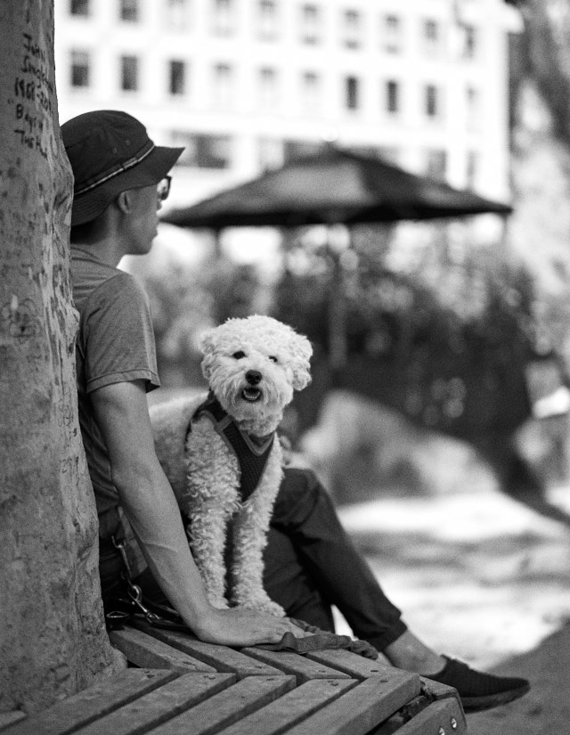 Enjoying the care-free life at Madison Square Park. Leica M10-P with Leica 50mm Summilux-M ASPH f/1.4 BC. © Thorsten Overgaard.