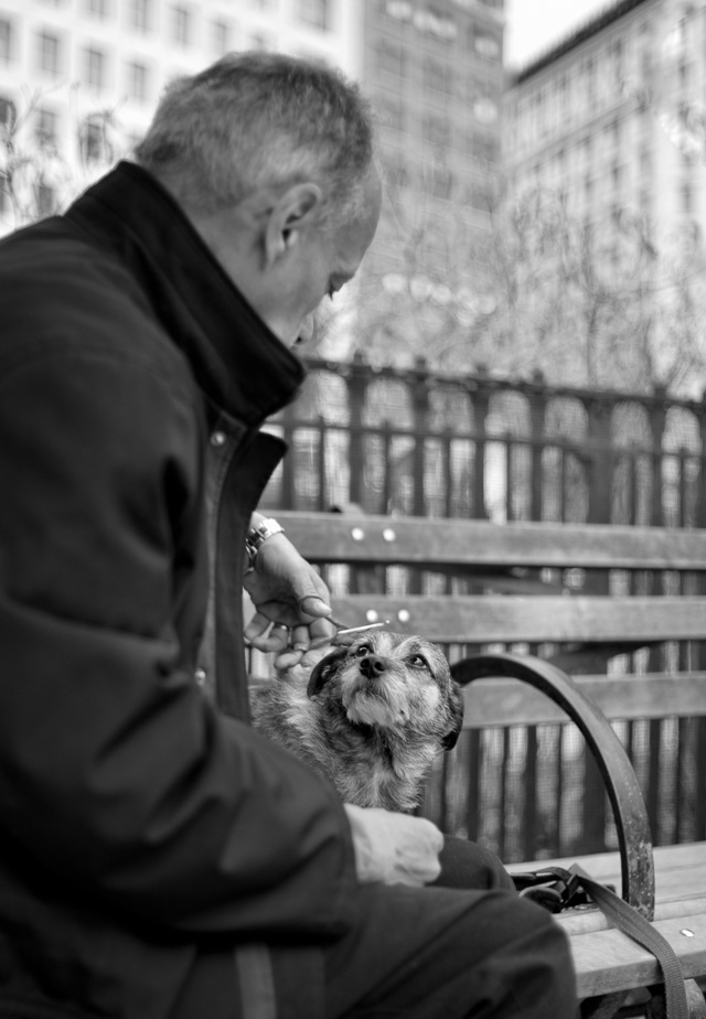 A dog and it's owner at Madison Square Park, New York, 2016. Leica M 240 with Leica 35mm Summilux-M ASPHERICAL f/1.4 AA. © 2016 Thorsten Overgaard.