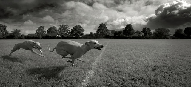 Winner of a Leica V-Lux camera and $1,200 cash award in the I-SHOT-IT.COM Dog Photo Competition May 2013. By Bob Patrefield, UK.
