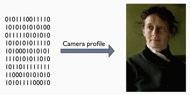 A raw file (or DNG) is simply the full recording of digital data (1's and 0's) from the sensor. In the computer, the sensor data is translated into the exact colors, via a camera profile.